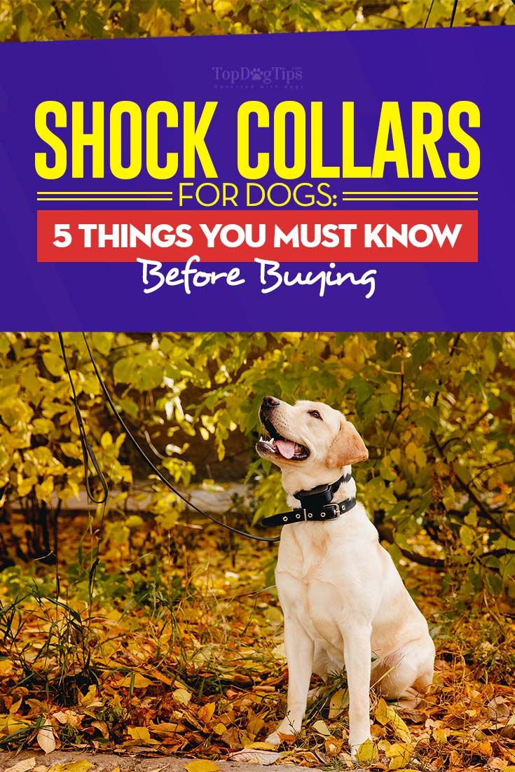 Shock Collar for Dogs: 5 Things You MUST Know Before Buying One