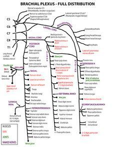Best 25 skin anatomy ideas on pinterest human reference facial instant anatomy is a specialised web site for you to learn all about human anatomy of the body with diagrams podcasts and revision questions ccuart Image collections