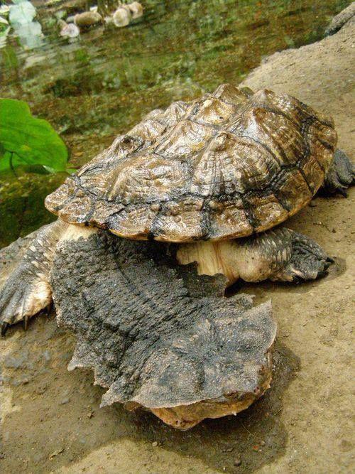 A rare turtle