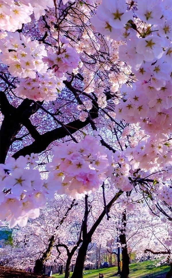Happiness Travel Relax Take A Break Happy Enjoy Hiking Free Time Country See The Wo Flowers Nature Beautiful Nature Wallpaper Blossom Trees