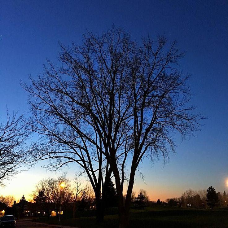 Soir de #printemps sur la Rive-Sud #viedebanlieue #sunset  #boucherville #walk #eveningwalk