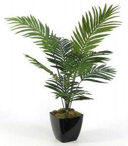 4ft Paradise Palm