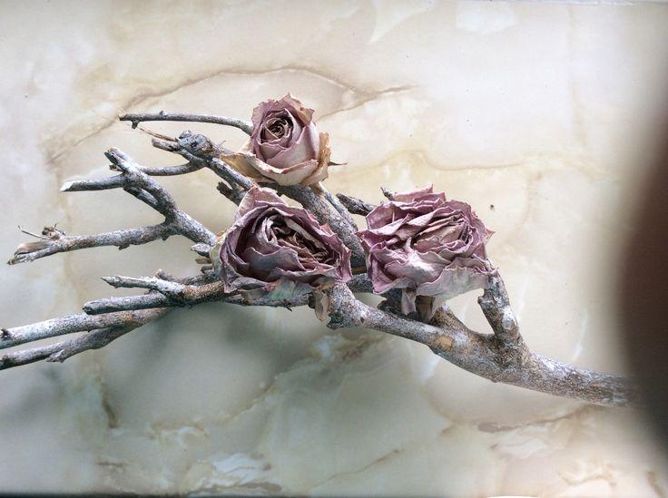 Gedroogde rozen op een tak