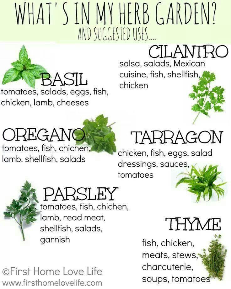 Creating a Kitchen Herb Garden | Things I love | Herb garden in