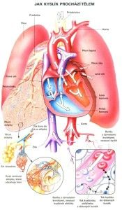 Jak kyslík prochází tělem