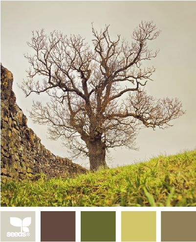 tree tonesEarth Tone, Design Seeds, Bedrooms Colors, Room Colors, Colors Palettes, Trees Tone, Colors Schemes, Master Bedrooms, Colori Nature