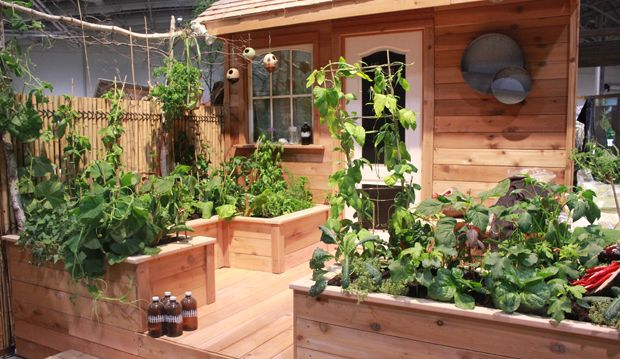 Edible Gardens Go Global display (A20) at #CanadaBlooms