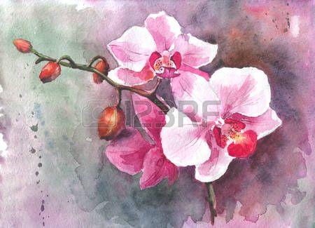 Aquarel hand getekende bloemen orchidee Stockfoto