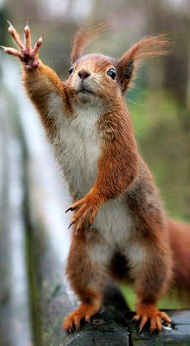 Gimme dat (Eichhörnchen haben keine Manieren)   – Squirrel-Eichhörnchen