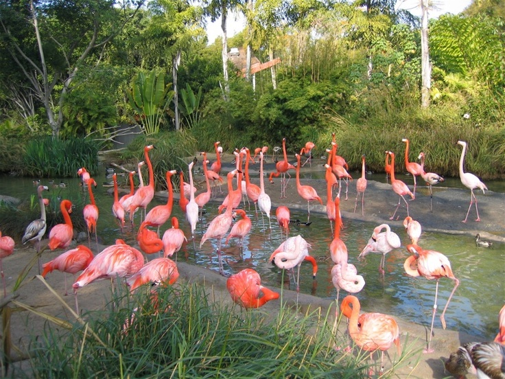 I could take my daughter to see the flamingoes at the San Diego Zoo..