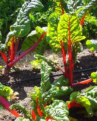 Top 10 Reasons To Grow Your Own Organic Food Read more at