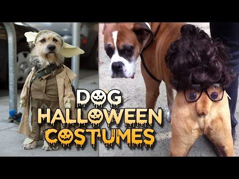 15 Awesome Dog Halloween Costumes