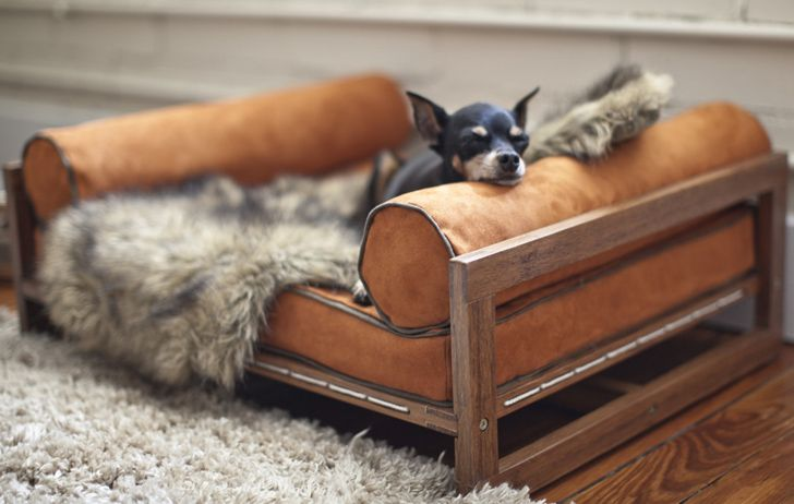 Architect Pets - furniture designed for our furry friends