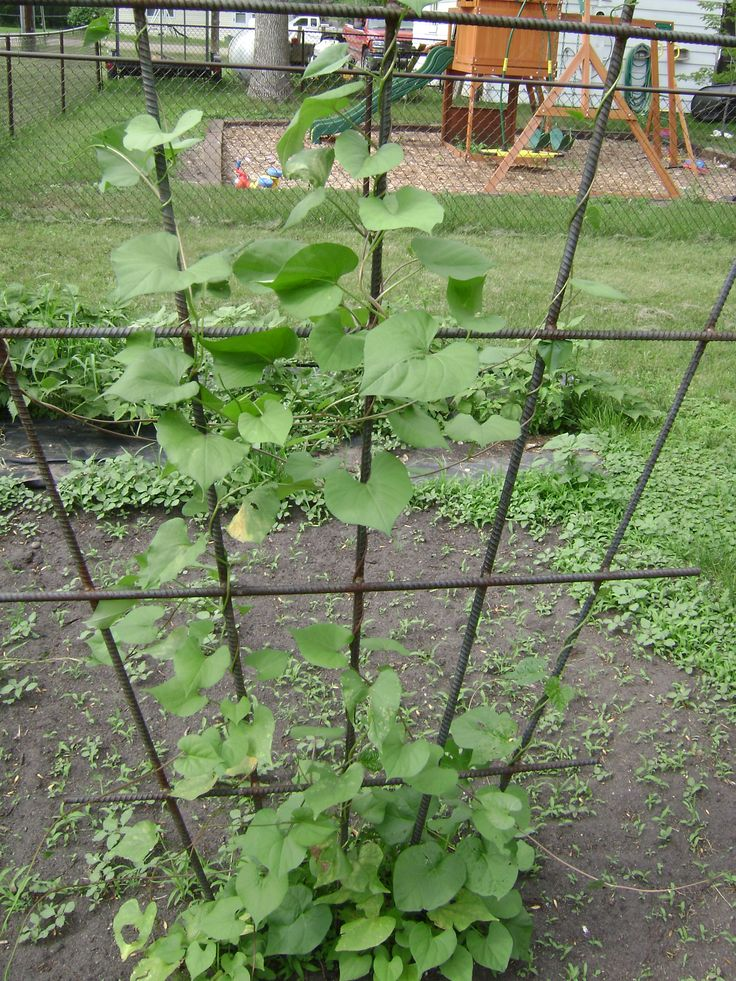 A super sturdy vertical trellis welded from metal rebar for Trellis design ideas