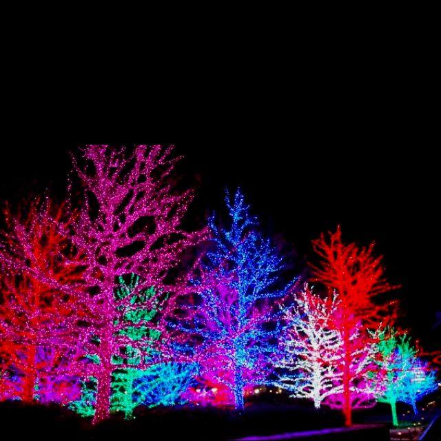 Beautiful Christmas lights | Christmas Lights