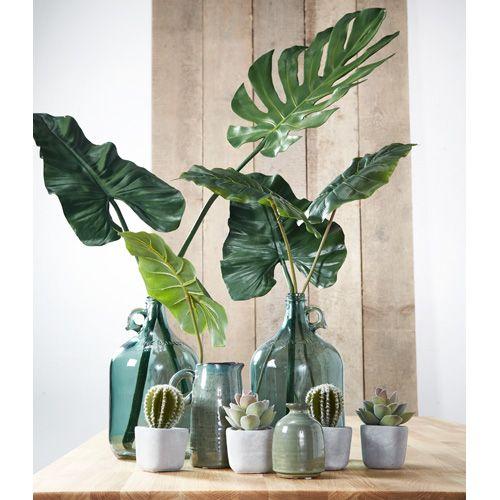 Mix en match PLANTEN voor een eigen Urban Jungle. #kwantum #planten #botanisch #urbanjungle #bontanischetrend #cactus