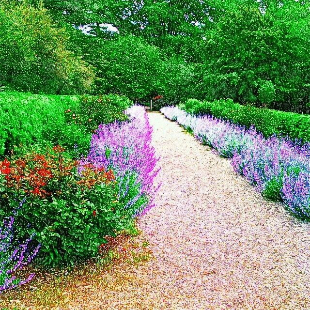 Westbury Gardens Rose Garden: 17 Best Images About Planting Fields Arboretum On