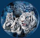 imagem animada de tigre branco