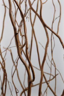 8.99 SALE PRICE! Embellish your floral arrangements with these unique natural curly willow branches. They come with 12 branches in a bunch. Each one is 36-60...