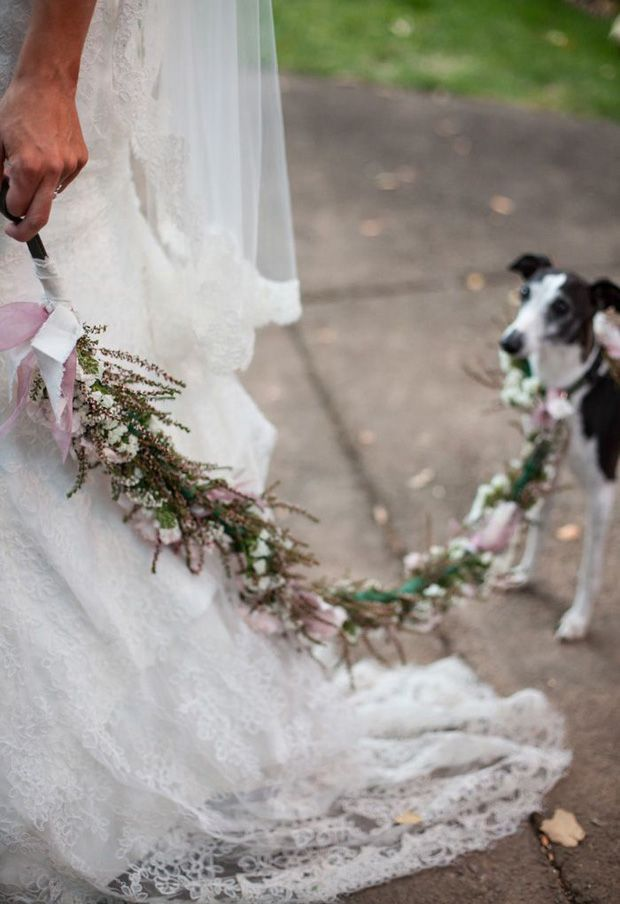 15 cute ways to get your dog wedding ready   doggie aisle style!