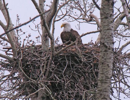 eagle nest chat sites Lost eagle rv park show prices  cabin/campground  #11 best value of 11 places to stay in eagle nest free wifi free parking other places to stay near eagle.