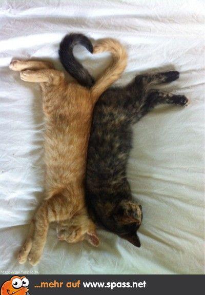 Katzen Herz