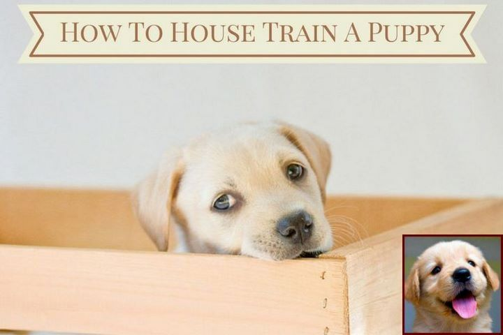 House Training A Puppy Without Crate And Dog Training Classes Near