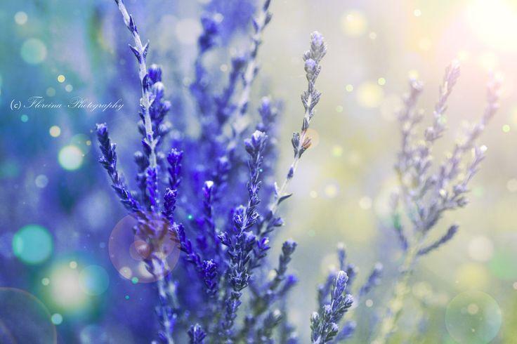 Tenderness by Floreina-Photography on DeviantArt #flowers #blue #morning #beautiful #gorgeous #plants #photography #bokeh #macro #dreamy #lovely #finland #scandinavia #inspiration #kukkia #valoa #aamu #kaunis #inspiroiva #suomi