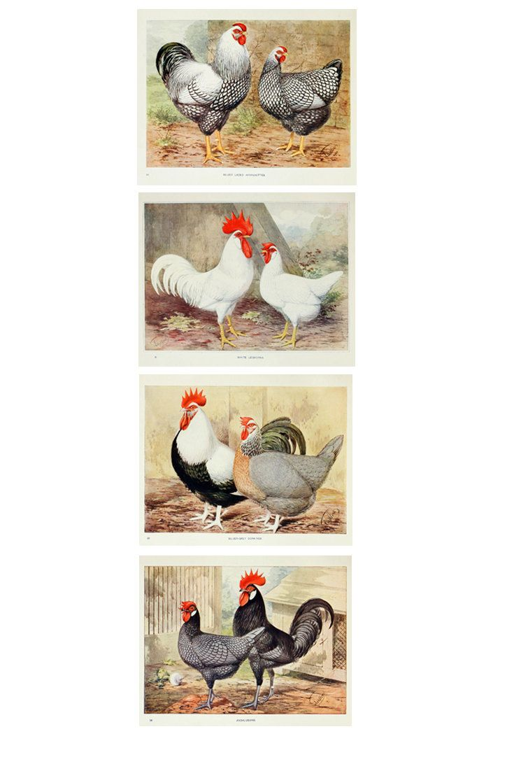 This Item Is Unavailable Etsy Rooster Wall Art Kitchen Decor Wall Art Bird Wall Art