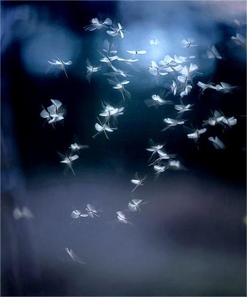 **Blue & white