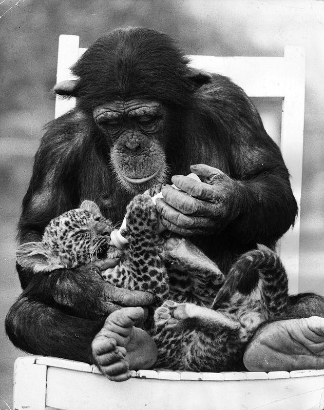 картинки забавных животных черно-белые
