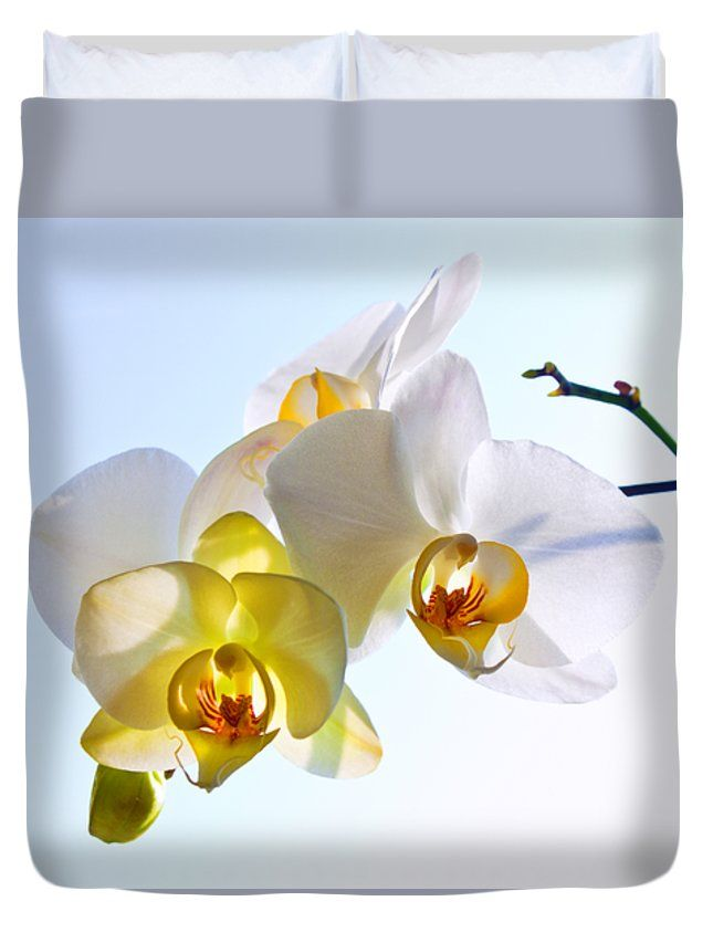ORCHID WITH SKY BACKGROUND by VICTOR KOVCHIN.   Belong to the Galery Russian Artists New Wave  Elegant and beautiful white orchid against the light blue sky. #RussianArtistsNewWave #Orchid #FlowerArt #VictorKovchin #WhiteOrchid #Garden#Flowers #White #InteriorDesign #HomeDecor #Canvas #FramedPrints #AcrylicPrints #FloralDesign #Tropical #Duvet #Bed #Bedroom #BedroomIdeas