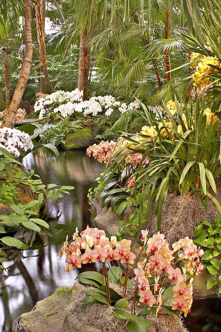 488 besten orchideen in natur garten und kultur bilder for Orchidee da esterno