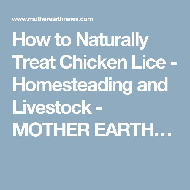 1000 ideas about How To Treat Lice on Pinterest
