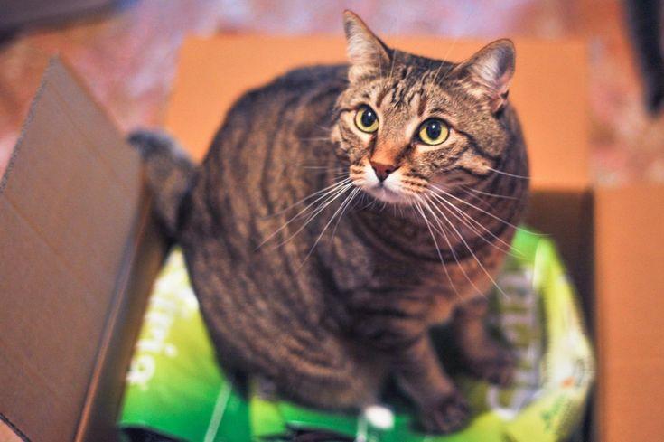 #gatto #recensione blog amici di chicco una splendida recensione per una lettiera di qualità strepitosa :)