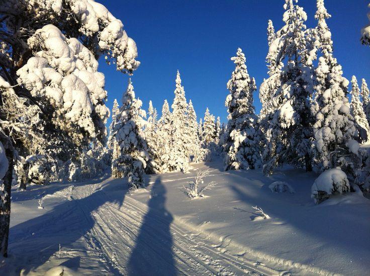 Østfjellet i vinterdrakt, Engerdal, Norway.