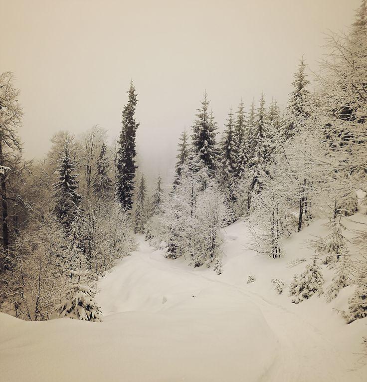 O iarna frumoasa | Bihor in imagini