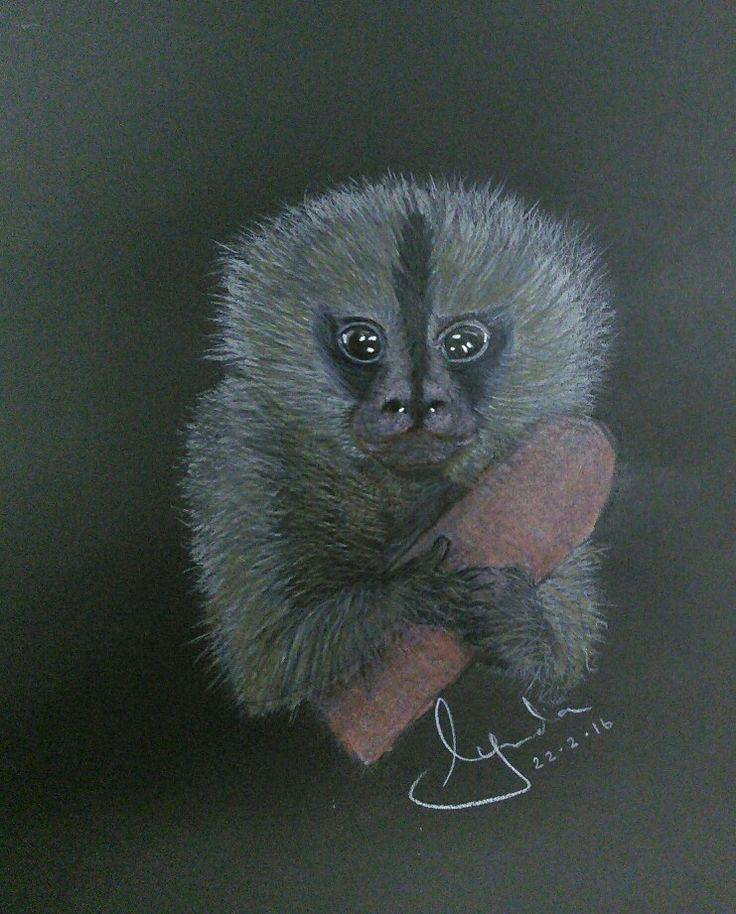 Pygmy Marmoset coloured pencil drawing by Lynda Colley Originals