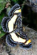 Butterflies And Moths 14
