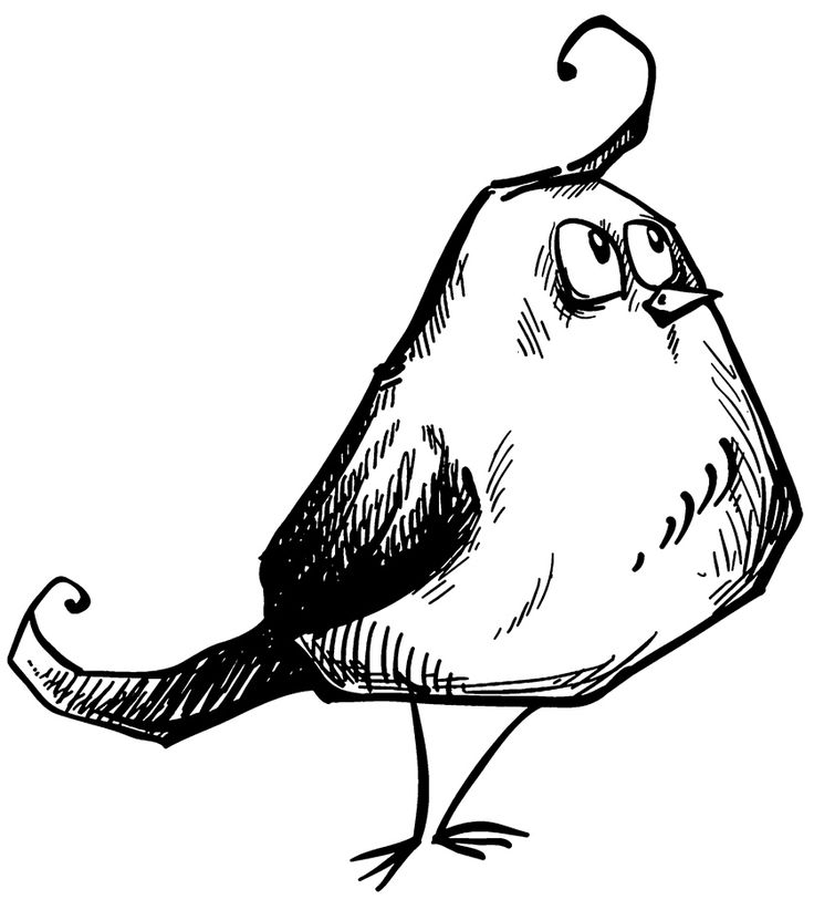 Funny Fat Bird