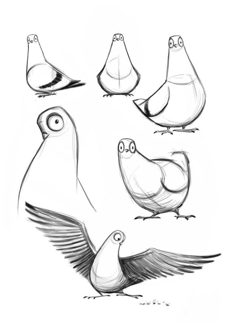 pigeon drawing simple - Google Search                                                                                                                                                                                 More