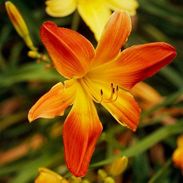 Best 25 colorful flowers ideas on pinterest flowers for Colorful low maintenance flowers