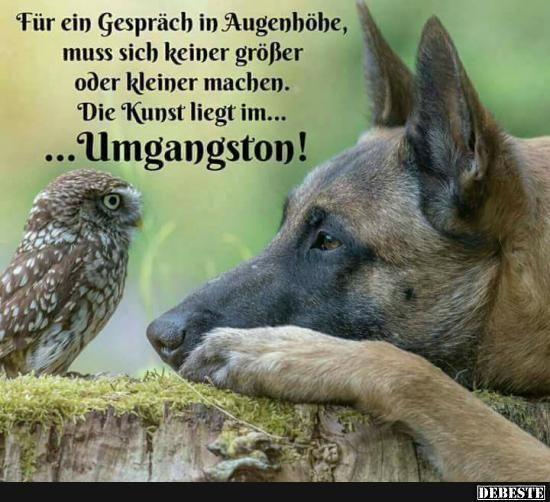 17 best german quotes on pinterest fear quotes psychological warfare and zitate. Black Bedroom Furniture Sets. Home Design Ideas