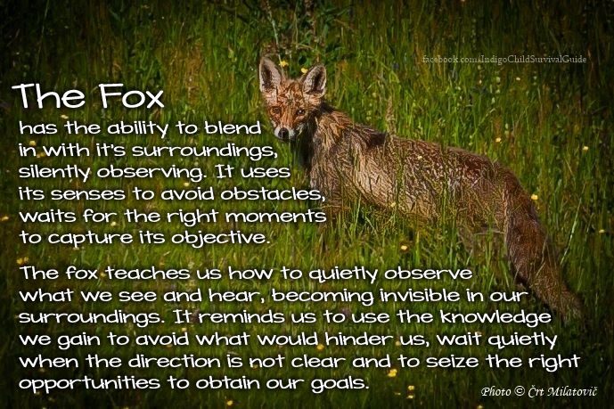What does the fox say? The Fox teaches us to observe, learn and patiently wait for the path to open to reach our goals.