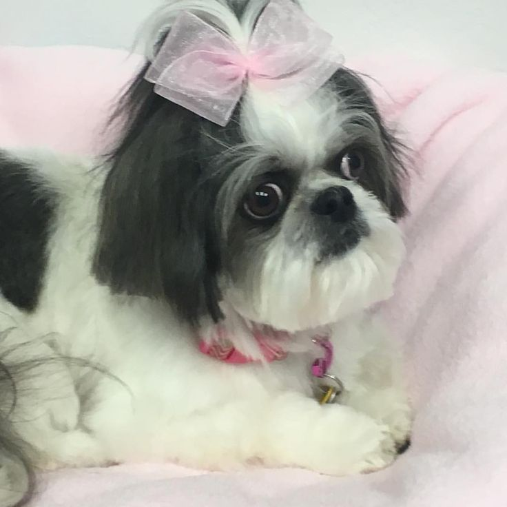 20 best dog grooming oklahoma city images on pinterest doggies with her pink blanket solutioingenieria Gallery