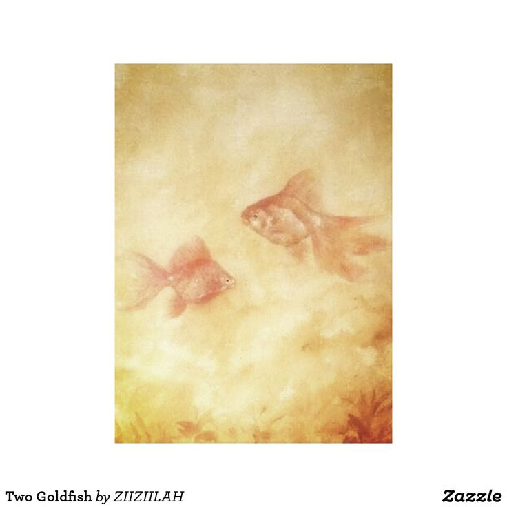 Two Goldfish Canvas Print for your room. Get it now