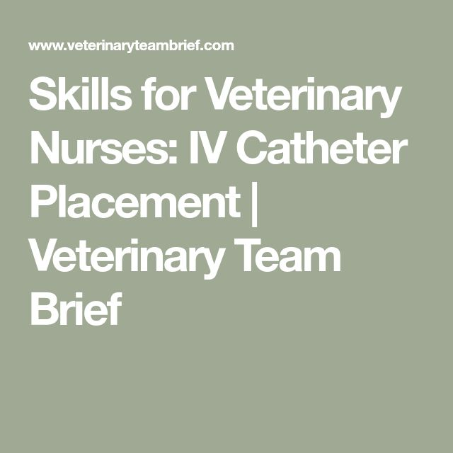 Skills for Veterinary Nurses: IV Catheter Placement | Veterinary Team Brief