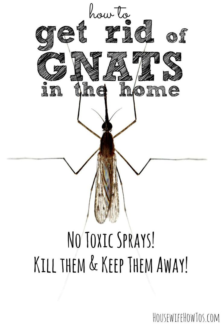 Tired of gnats flying around in your kitchen, or near your houseplants or drains? Some of them bite, even! Here's how to get rid of them and keep them away.