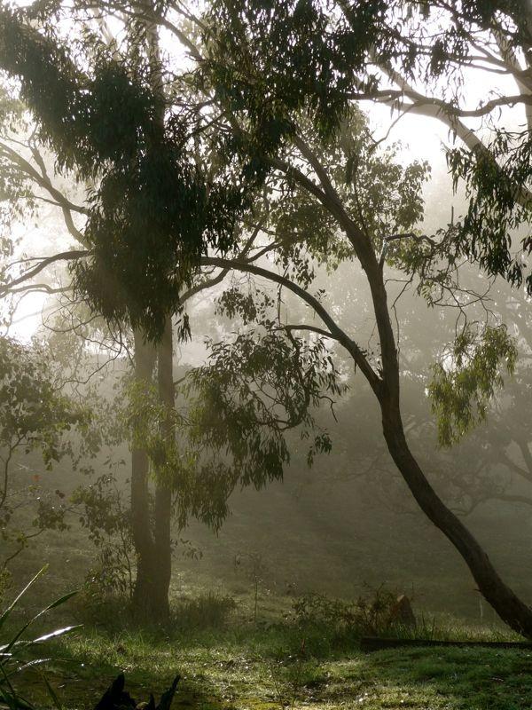Misty morning in Hepburn Springs www.bestofdaylesford.com