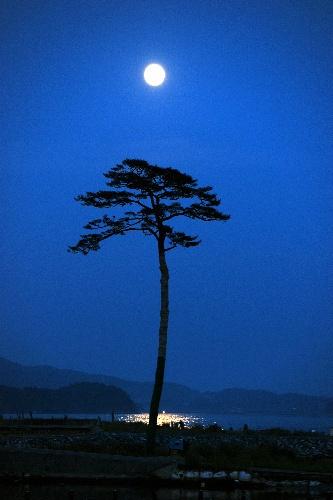 Survivor: Sendai, Japan ~ a pine tree left after the tsunami